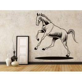 Samolepka na zeď Kůň 0367