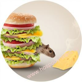 Jedlý papír myš